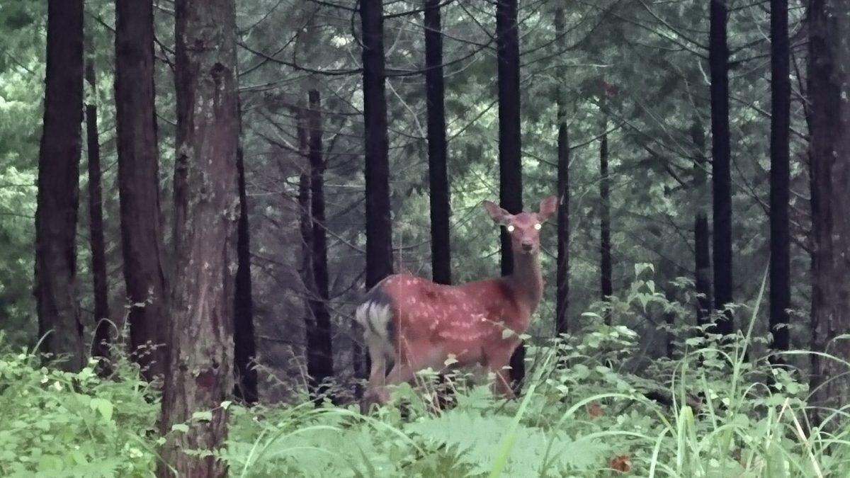 鹿の被害が深刻だぁ❗